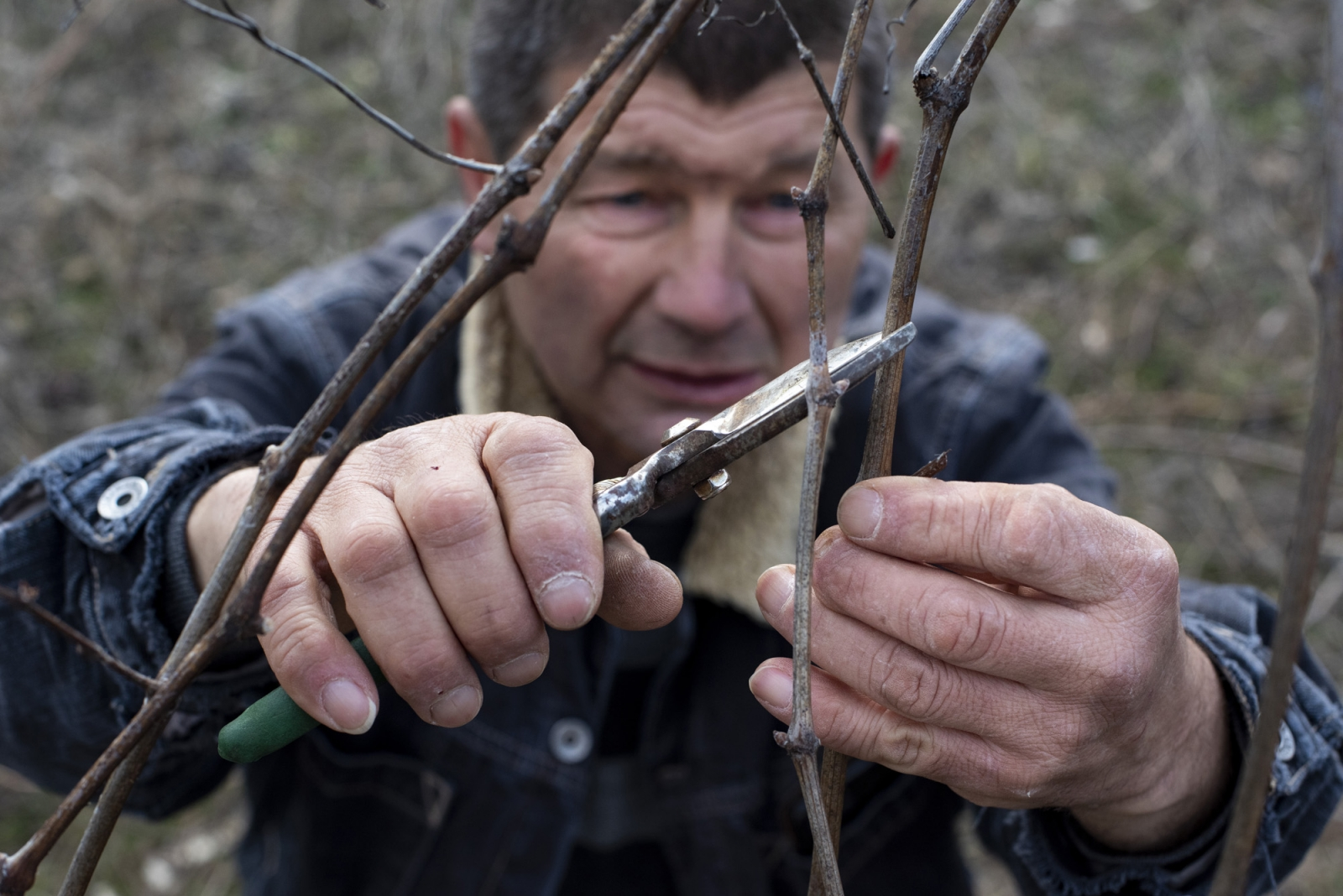 Velko does not drink, but enjoys the tradition of making wine and rakia, a grappa like liquor. On Saint Tryphon's Day, February 14, he pours a bottle of last year's wine into the soil to bring luck to the harvest before pruning the vines.
